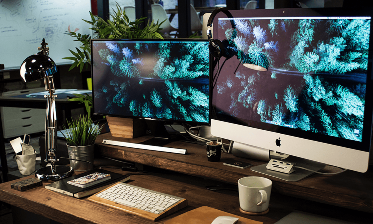 Two computer monitors on a desk, showing the same greenery wallpaper